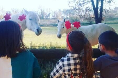 Equus Events