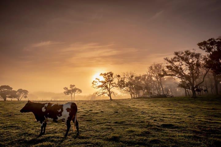 Farmstay Homestead at White Dog Lane