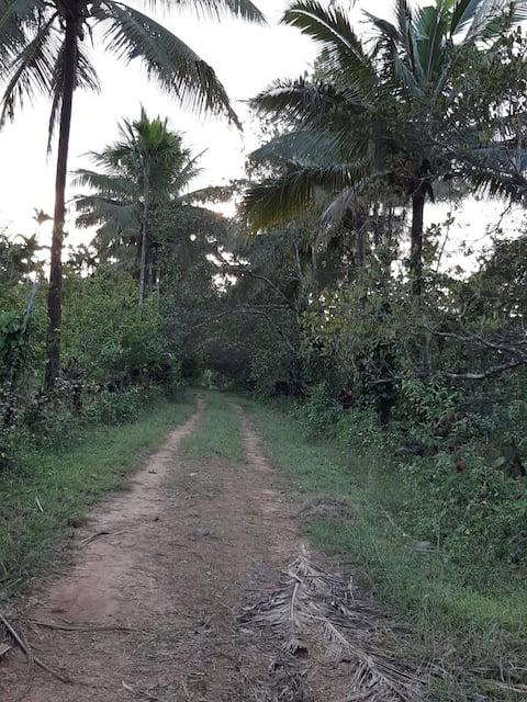 Serene offbeat Farm Stay in Malnad