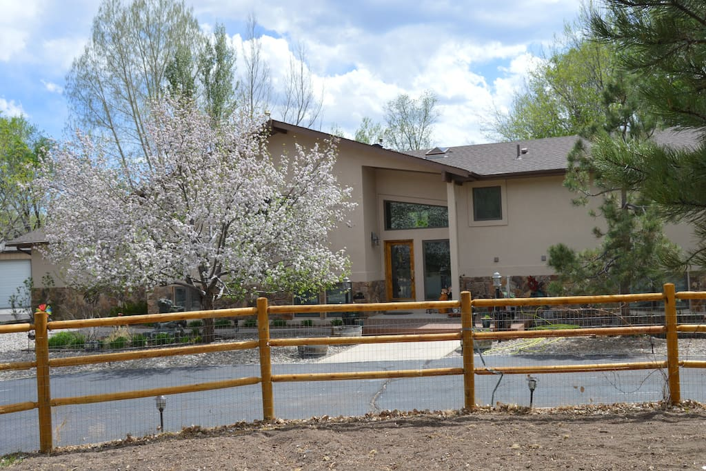 Front of house with apple tree in full bloom.