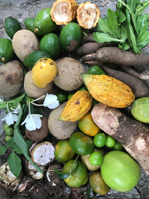 Some of the fruits and vegetables in our garden