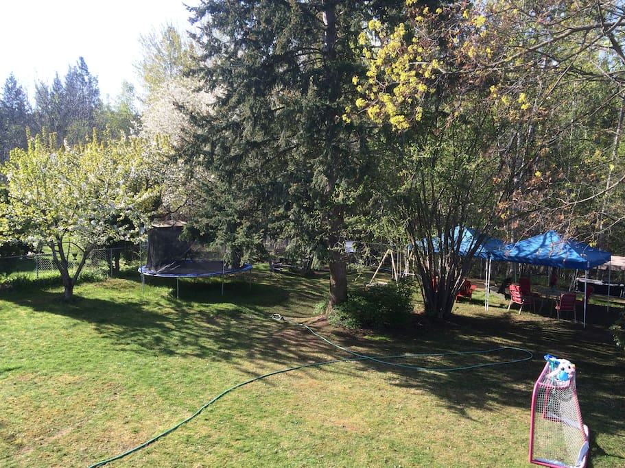 Backyard with fruit trees and outdoor equipment