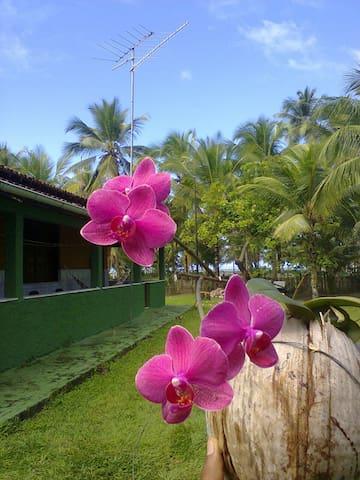 Casa de praia Shimbalaiê - Ilhéus - Casa