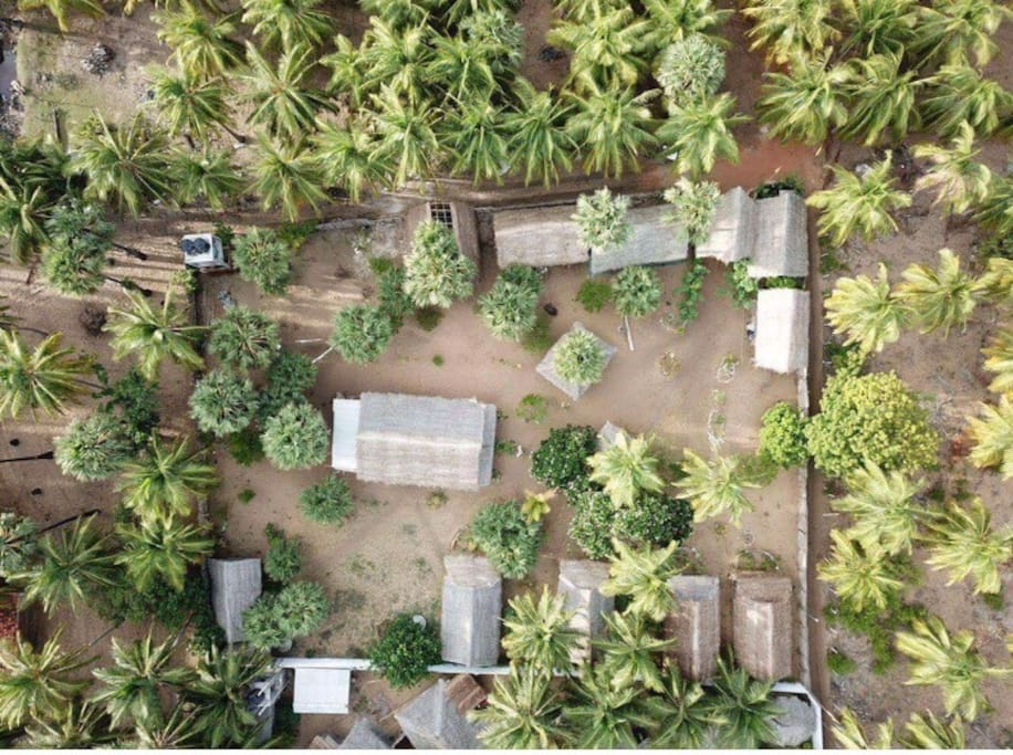 Birds eye view of our property nestled amongst the palms.