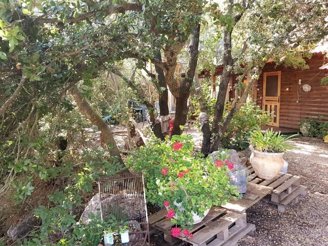 Wooden cabin in Abbirim