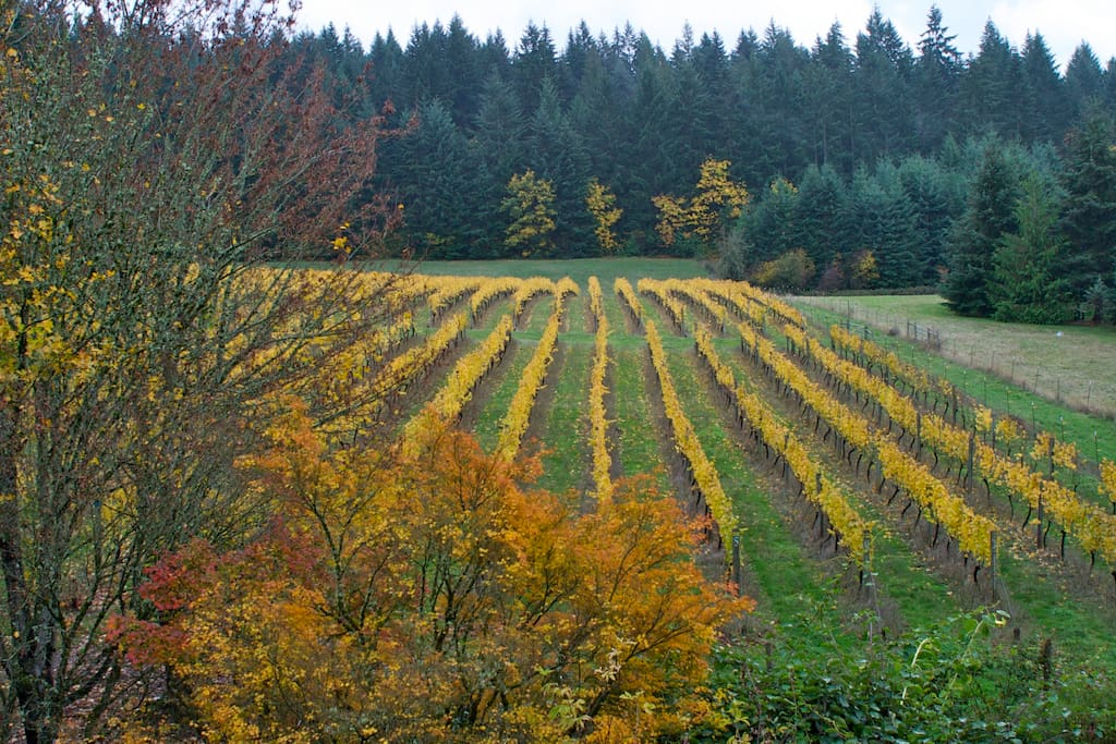 3 acres of Pinot Noir