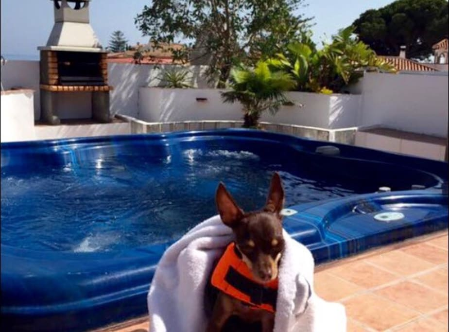 Our little dog sunbathing on the Roof Solarium by the Jacuzzi