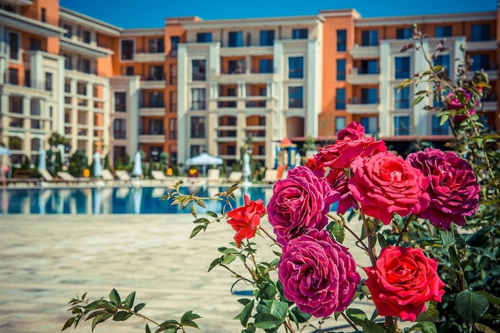 Roses at the complex
