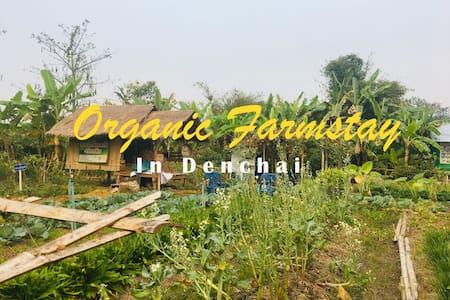 Organic Farmstay - Denchai  - Northern Thailand