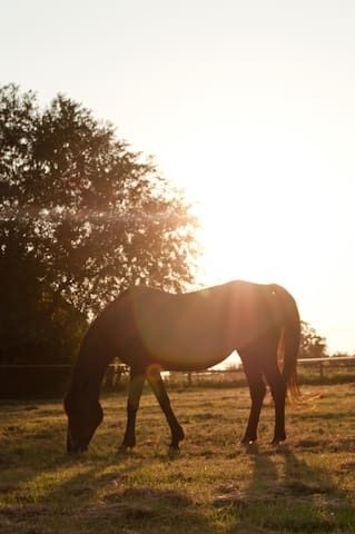Pretty Horse Farm & Rolling Hills Secluded in OKC! - Oklahoma City - Stuga