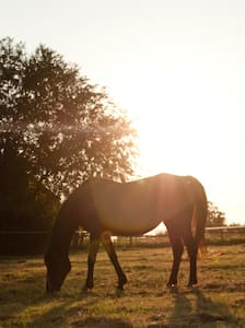 Pretty Horse Farm & Rolling Hills Secluded in OKC! - Oklahoma City - Kabin