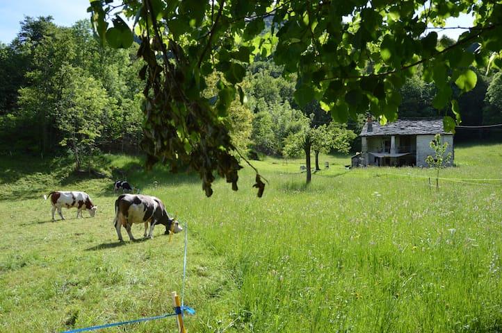 Ospitalità nel Bosco x Camper in Valchiusella