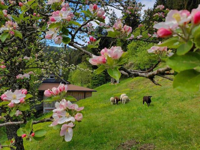 Urige Hütte am Waldrand - Erholung Pur