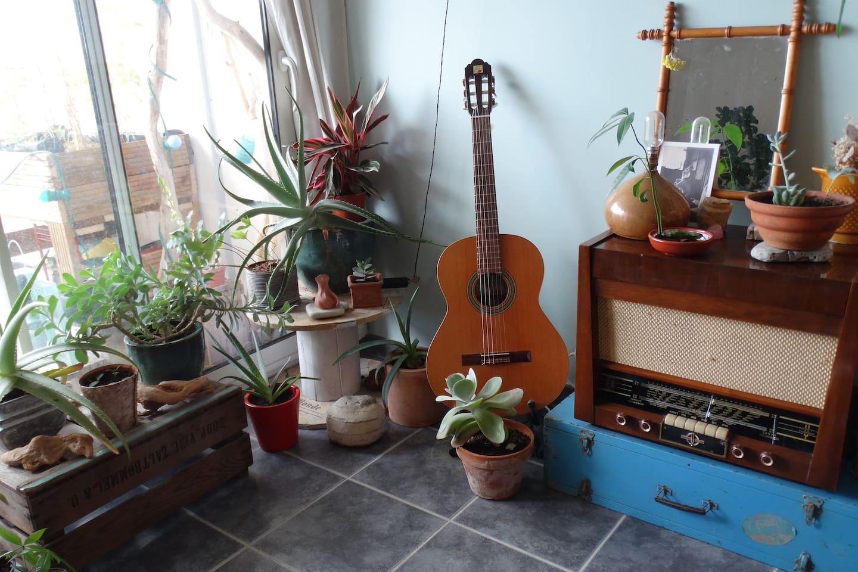 Petite jungle intérieure - salon