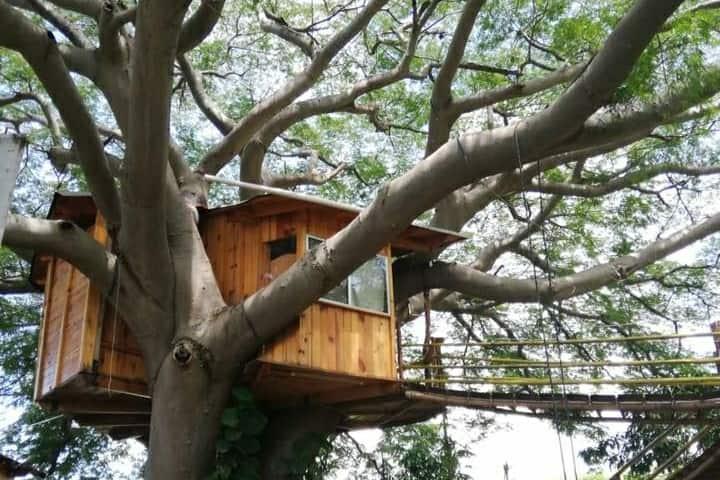 La Casa del árbol en  Huitzilin, siente el campo.