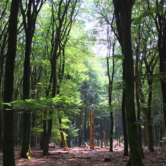Magical scenery in Vierhouten forest (Vierhouterbos) - adjacent to the Dennenholt Estate