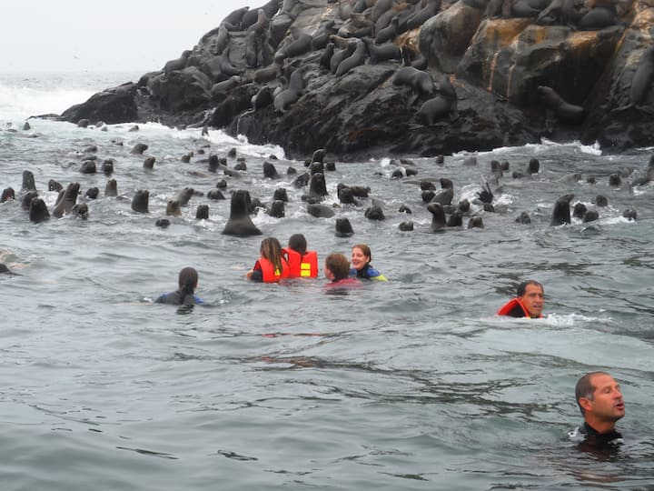 Enjoying among more than 8000 sea lions