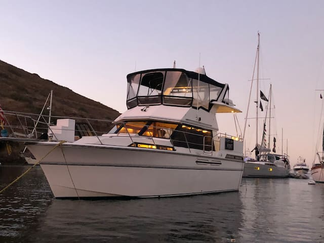 Yacht boat rentals, charters, activity