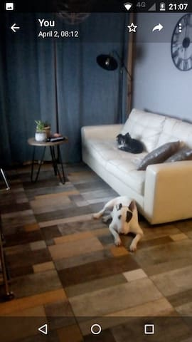 Lord Chihuahua