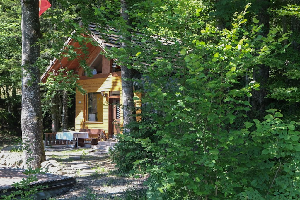 Geschützt unter grossen tannen und Bäumen liegt das idyllische Cabin