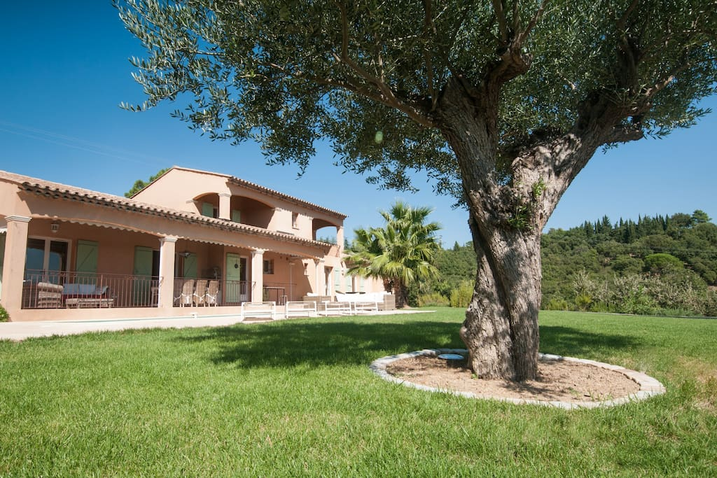 Garden and olive tree