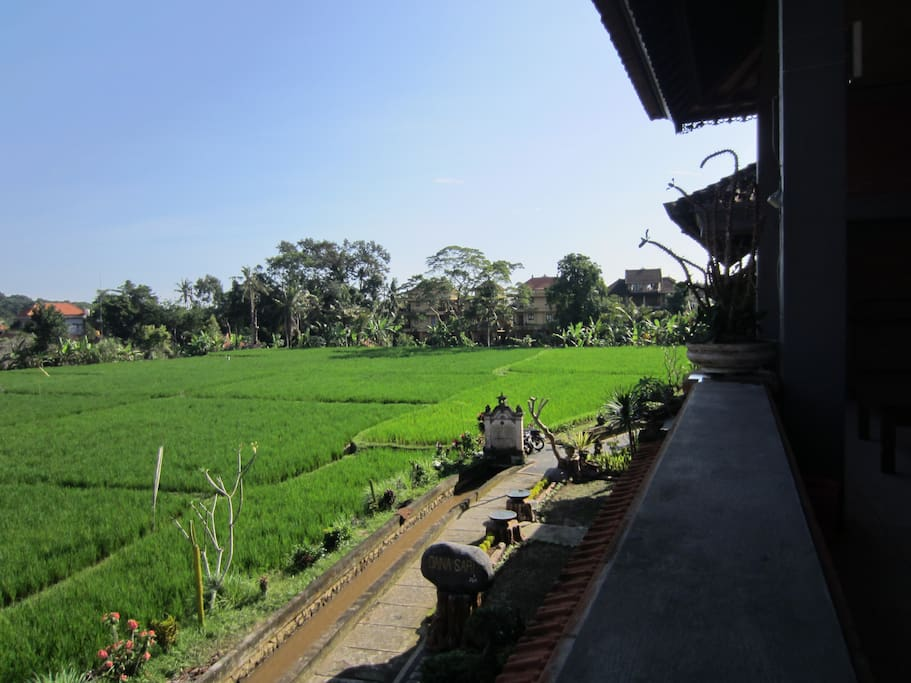 Rice Field View from Balcony