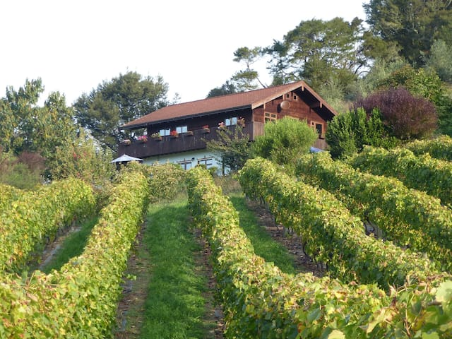 Swiss Chalet over hilly vineyard and river - Ngatimoti