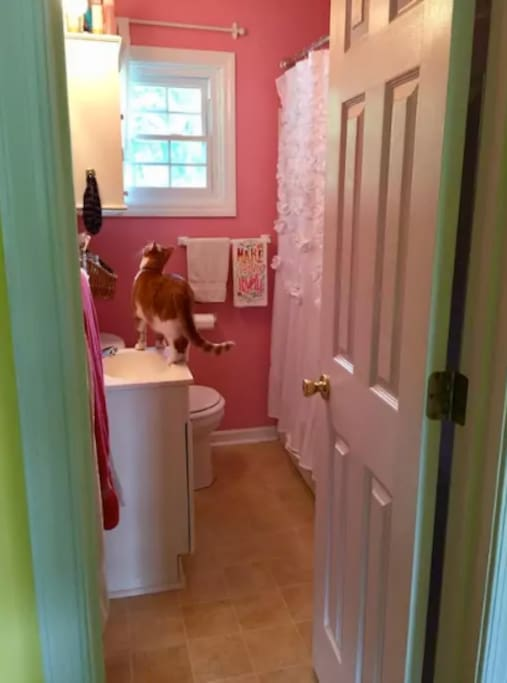 Shared bathroom (cat not included).