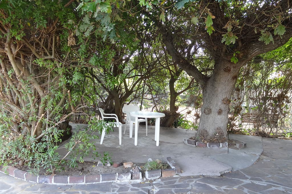 Tranquility under the oak tree