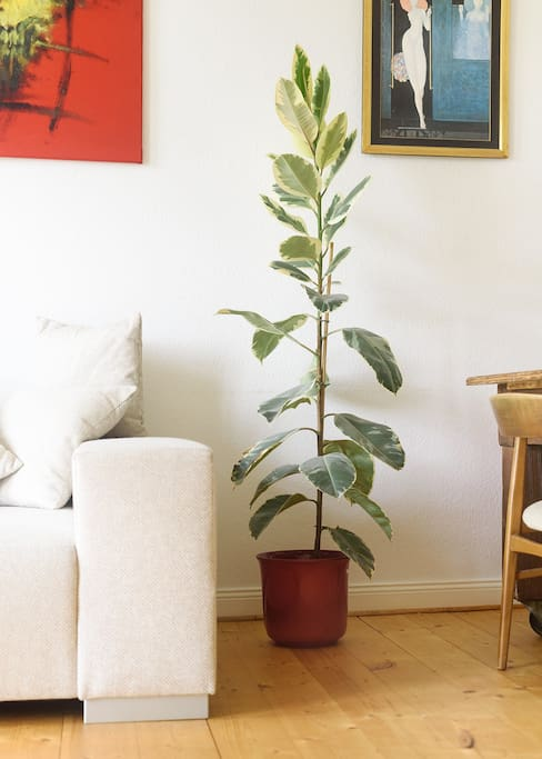 Your living room (Plant)