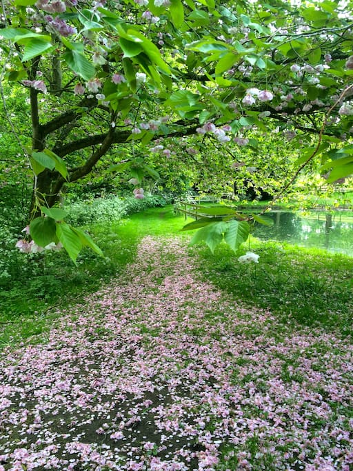 Part of the romantic 8 acre garden - June