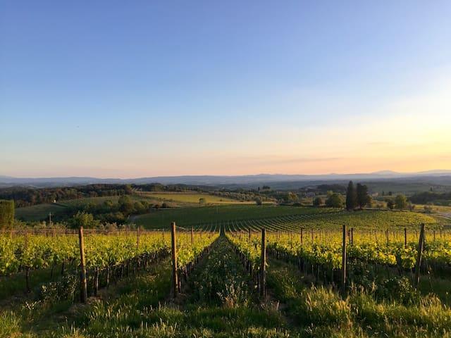 Nearby vineyards
