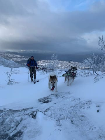 NordicLight Husky and ski in
