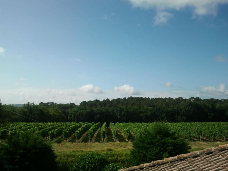 Side view from Balcony over the Vineyards