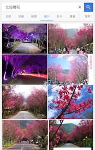 北投私密溫泉湯屋,山上櫻花盛開了。 - Beitou District