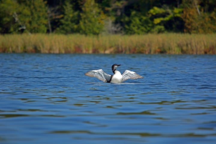 Geddes Lakefront Serenity Retreat