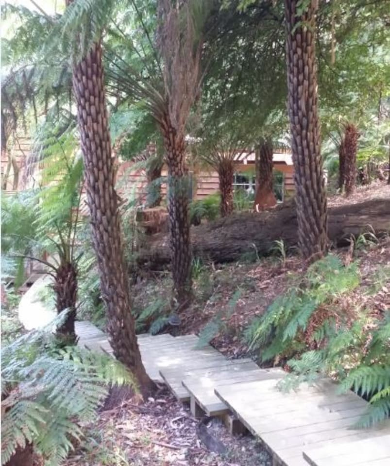 Boardwalk to the house