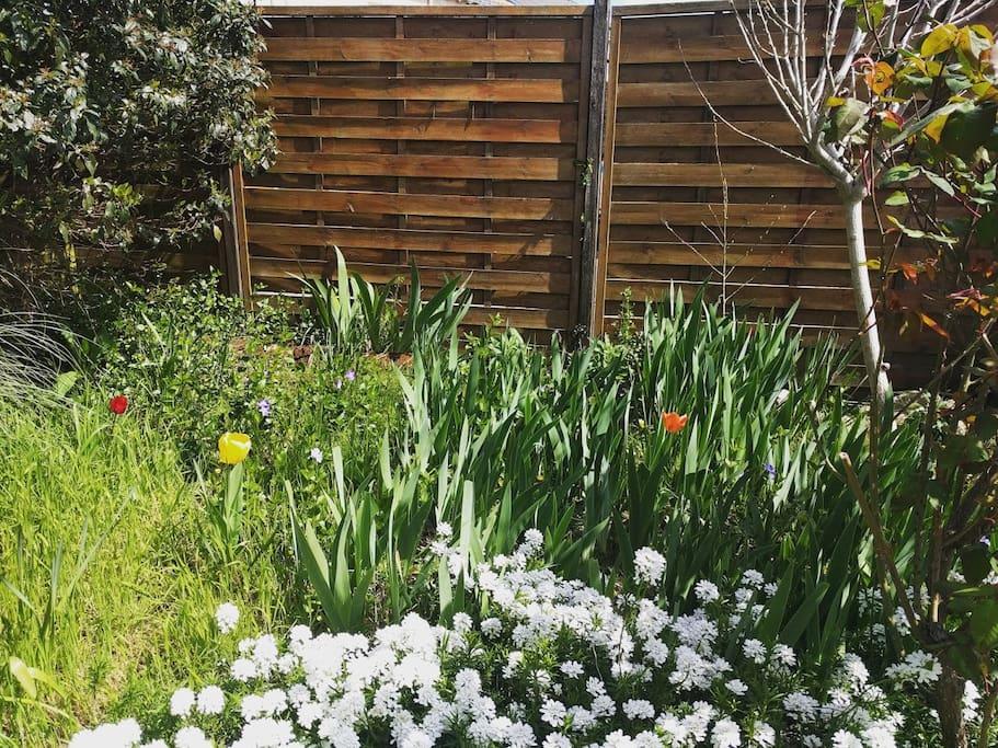 Un jardin en pleine reconstruction