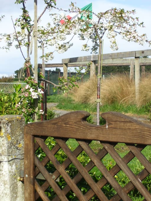 The red tussock garden