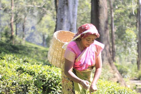 Meena Amma's Tea Experience