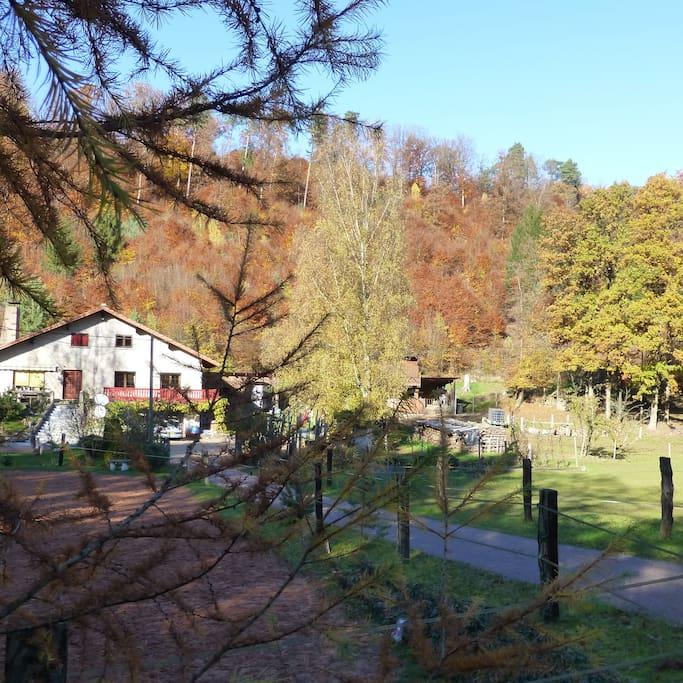 la vue de la maison en automne, entourée de forêt et de chevaux