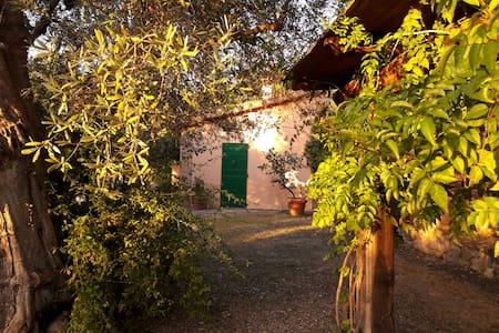 Casa nel parco sotto le antiche mura di Capalbio