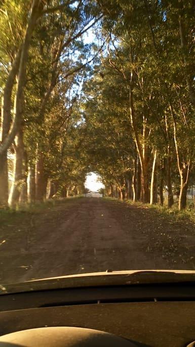 Entrada principal por camino de tierra.