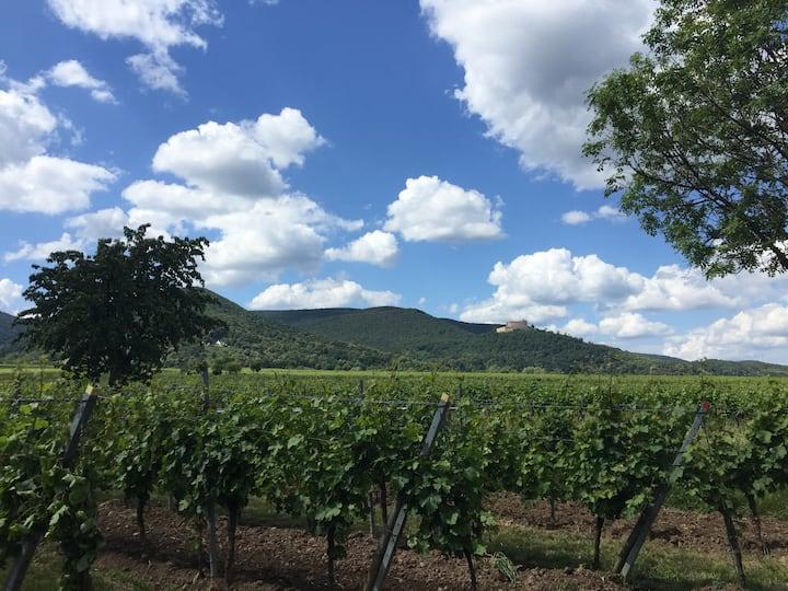 Das Leben genießen im schönen Weinort Maikammer