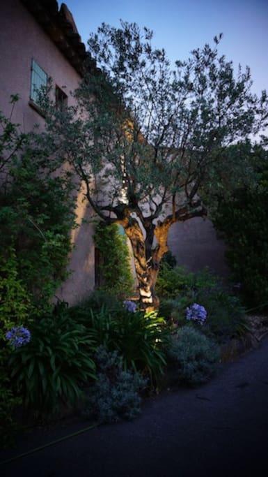 Olive Tree entrance