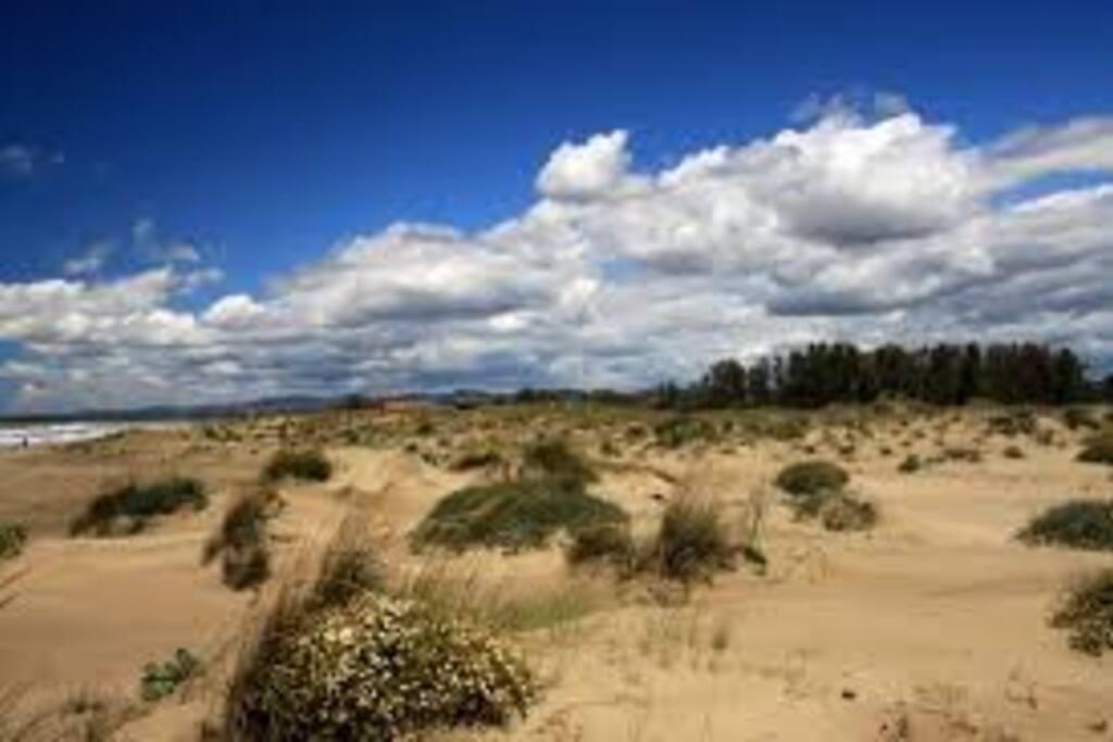 Il granello di sabbia pernottamento e colazione in for Interno 1 ostia