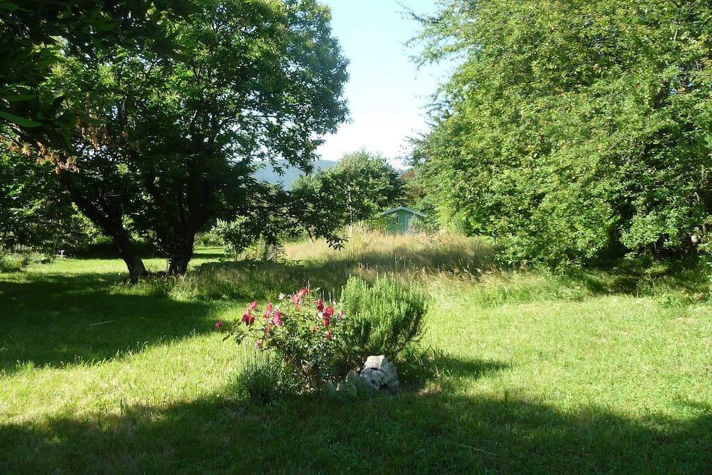 Le jardin vu de la maison