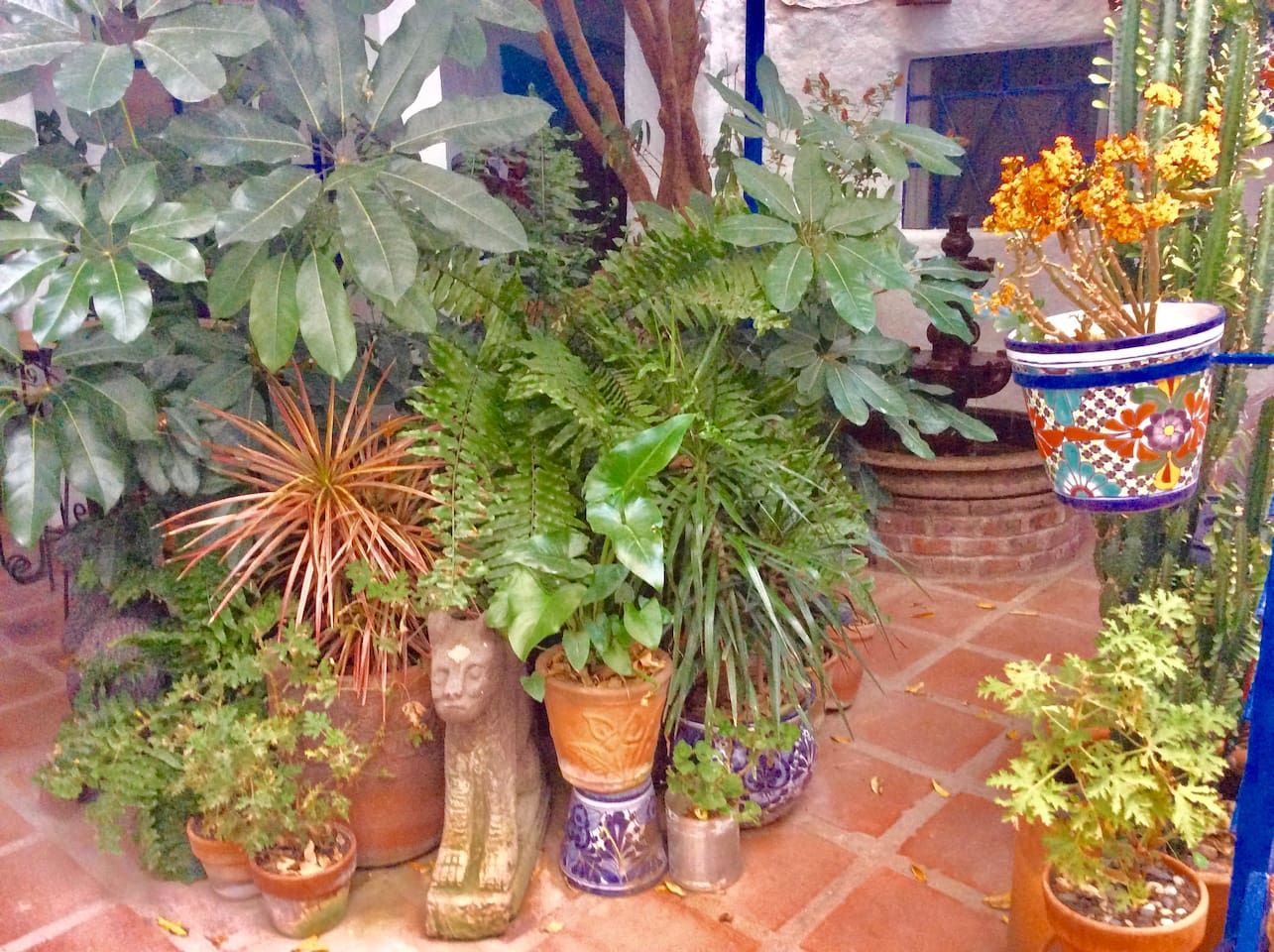 Step inside the front door and be greeted by a jungle of plants.