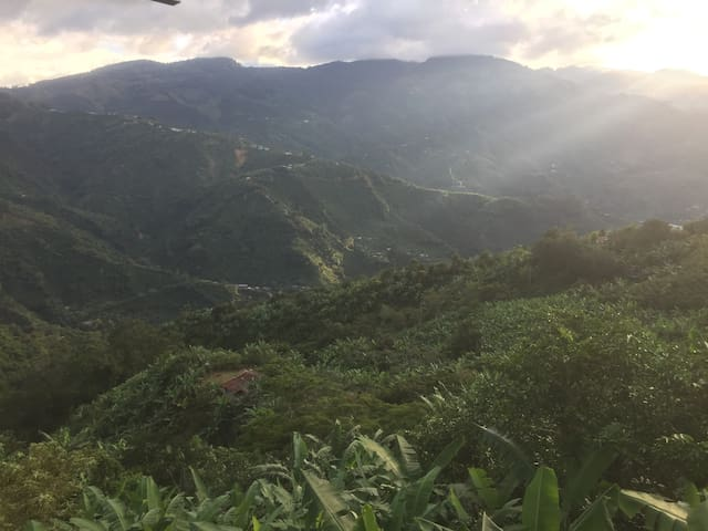 San Juan coffee and banana in the mountains