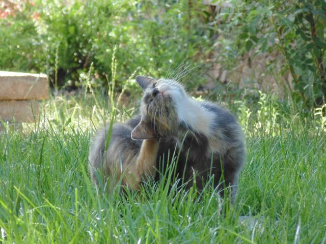 Rozi macska vendégszobája, Paloznak
